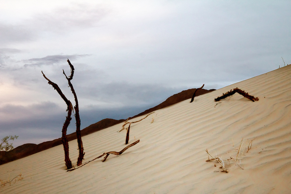 Mesquite Sand Dunes, Death Valley, CA.  Branches in sand, dark blue sky and Amargosa mountain range.