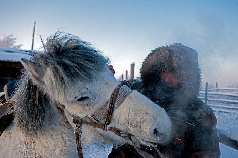 The Pole of Cold - Horse breeder with a Yakutian horse at a horse breeders farm close to the village of Tomtor. Yakut pony or simply the Yakut, is a rare native horse breed from the Siberian Sakha Republic (or Yakutia) region. It is noted for its adaptation to the extreme cold climate of Yakutia, including the ability to locate and graze on vegetation that is under deep snow cover. The area is extremely cold during the winter. Two towns by the highway, Tomtor and Oymyakon, both claim the coldest inhabited place on earth (often referred to as -71.2°C, but might be -67.7°C) outside of Antarctica. The average temperature in Oymyakon in January is -42°C (daily maximum) and -50°C (daily minimum). The images had been made during an outside temperature in between -50°C up to -55°C. Tomtor, Jakutien, Yakutia, Russian Federation, Russia, RUS, 19.01.2010