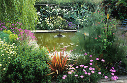 General view of the pond in summer with Anthemis tinctoria 'Sauce Hollandaise', Geranium palmatum, Phormium 'Sundowner', Rosa 'Iceberg' and bronze fennel