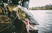 North Woods Musky