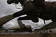 An outrider horse gallops by during the 94th Annual Falkland Stampede in Falkland, BC (2012)
