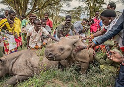 Samburu warriors encounter a rhino for the first time in their lives at Lewa Wildlife Conservancy. Only their grandfathers saw rhinos in the wild and these young men had never even seen a photo of one. Based on stories and their own imaginations, they expected the young rhinos to be as big as elephants, as dangerous as lions and for their horns to be flexible, like an elephant's trunk. Much-needed attention has been focused on the plight of wildlife, but very little has been said about the indigenous communities on the frontlines of the poaching wars.