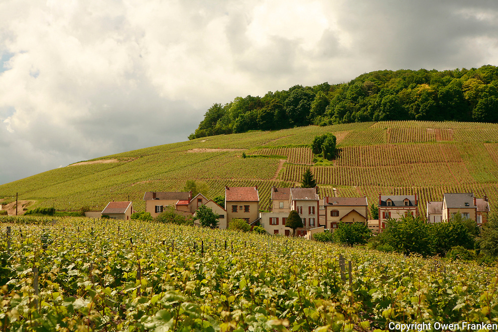 Vineyards in the village of Avize, near Epernay..Avize is within the Champagne territory...Photo by Owen Franken for the NY Times..May 17, 2008