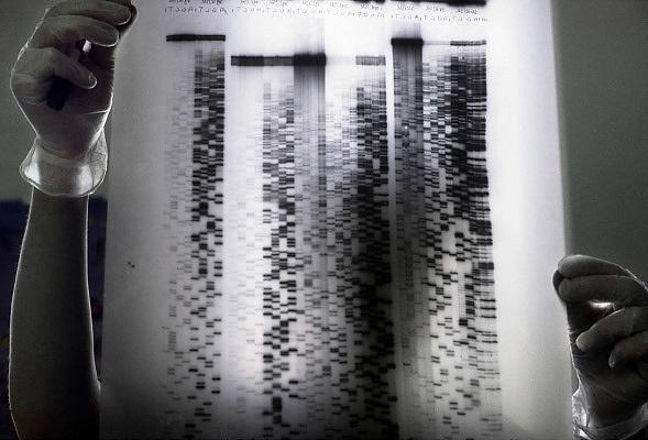 Nederland, Nijmegen, 5-2-2007 Het DNA-profiel van een mens, patient. Genetisch onderzoek in een medisch laboratorium.Een onderzoeker toont een afbeelding van DNA onderzoek.Foto: Flip Franssen
