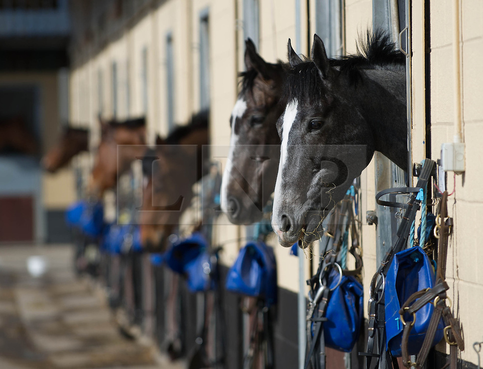 © Licensed to London News Pictures. 22/03/2014<br /> <br /> Middleham, North Yorkshire<br /> <br /> Race horses wait in their stalls after morning exercise at the Mark Johnston stables in Middleham, North Yorkshire. Race horses have been trained in Middleham for over 200 years using the extensive gallops on the high moor. There are currently 15 stables based around the small Yorkshire village.<br /> <br /> Photo credit : Ian Forsyth/LNP