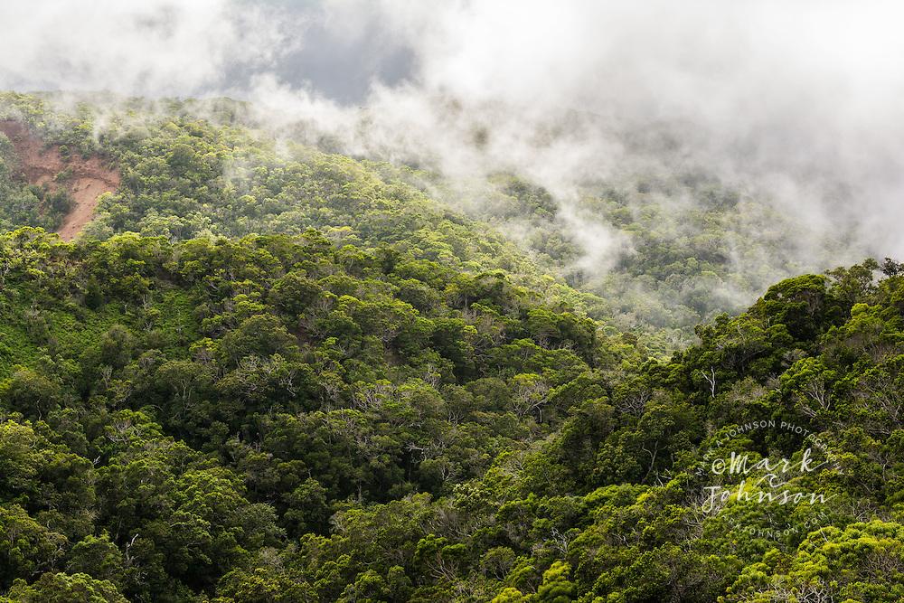 Rainforest of the central mountains, Koke'e, Kauai, Hawaii, USA