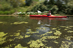 North America, United States, Washington, Bellevue, teenage boy kayaking  in Mercer Slough Nature Park, blurred motion.  MR