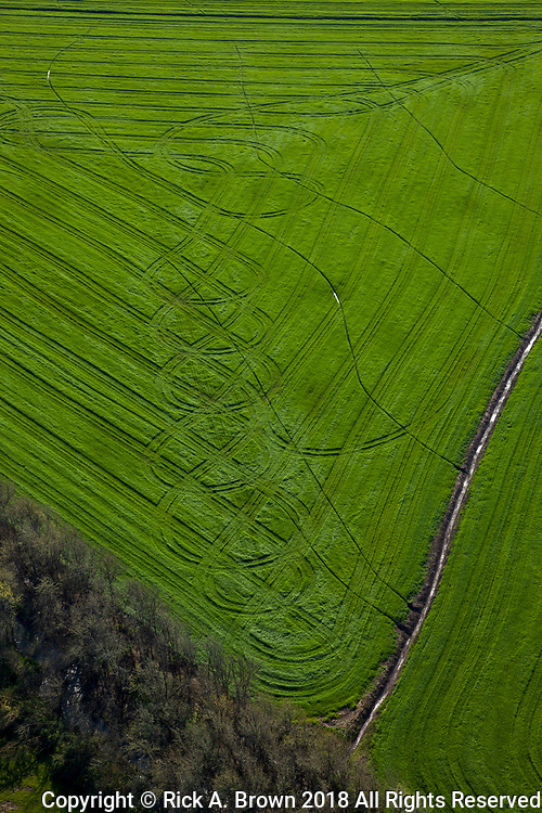 Tire marks through the grassfield in the Southern Willamette Valley.
