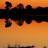 Morning Twilight Reflections, Little Blackwater River, Blackwater National Wildlife Refuge, Cambridge, MD