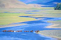 Mongolie. Province de Ovorkhanghai, Vallée de l'Orkhon.  Rassemblement des chevaux// Rallying of horses drove. Orkhon valley. Övörkhangai province. Mongolia.