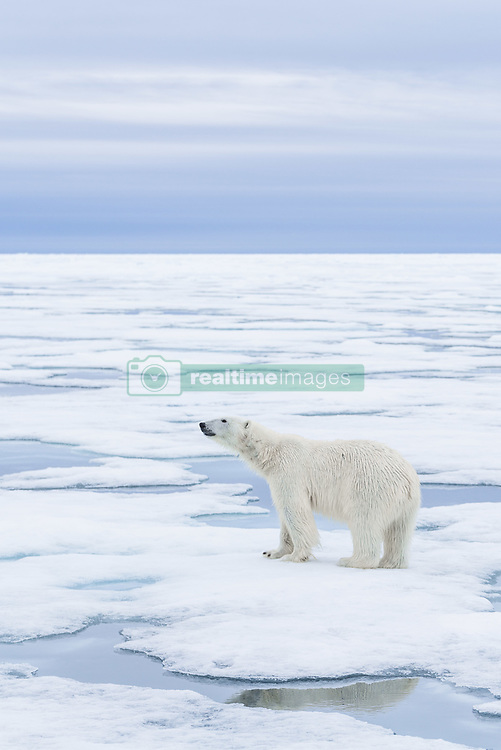 , Arctic - 7/17/2016 - (Photo by Shannon Wild/VWPics) *** Please Use Credit from Credit Field *** *** Please Use Credit from Credit Field ***
