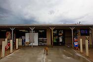 Stray dogs on Saturday, July 12, 2008 in Quijotoa, AZ.