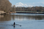 Rowing a racing shell on Bedford Channel of the lower Frasier River, Fort Langley, British Columbia.