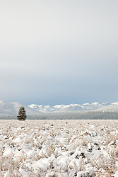 """Snowy Martis Valley 5"" - Photograph of a lone tree in a snow covered Martis Valley in Truckee, California."