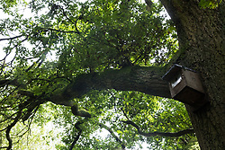 A nesting box is fixed to an oak tree at Calvert Jubilee Nature Reserve on 27 July 2020 in Calvert, United Kingdom. On 22nd July, the Berks, Bucks and Oxon Wildlife Trust (BBOWT) reported that it had been informed of HS2's intention to take possession of part of Calvert Jubilee nature reserve, which is home to bittern, breeding tern and some of the UK's rarest butterflies, on 28th July to undertake unspecified clearance works in connection with the high-speed rail link.
