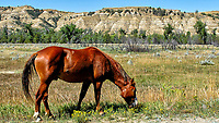Lone Wild Horse at Theodore Roosevelt National Park. Image taken with a Nikon D200 camera and 18-70 mm kit lens (ISO 100, 18 mm, f/5.6, 1/400 sec).