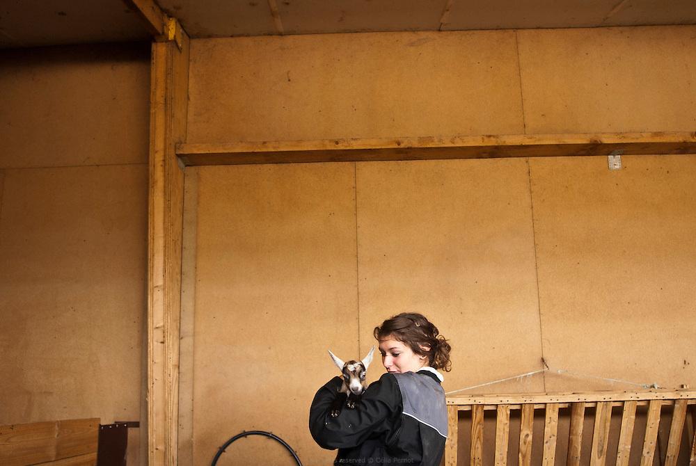La chèvrerie de l'exploitation agricole rattachée au lycée permet aux élèves d'expérimenter toutes les tâches quotidiennes du métier d'Éleveur de chèvres : entretien et alimentation, échographie, mise bas, allaitement des chevreaux, traite... Lycée agricole Jacques Bujault. Melle, Poitou-Charentes, automne 2010.