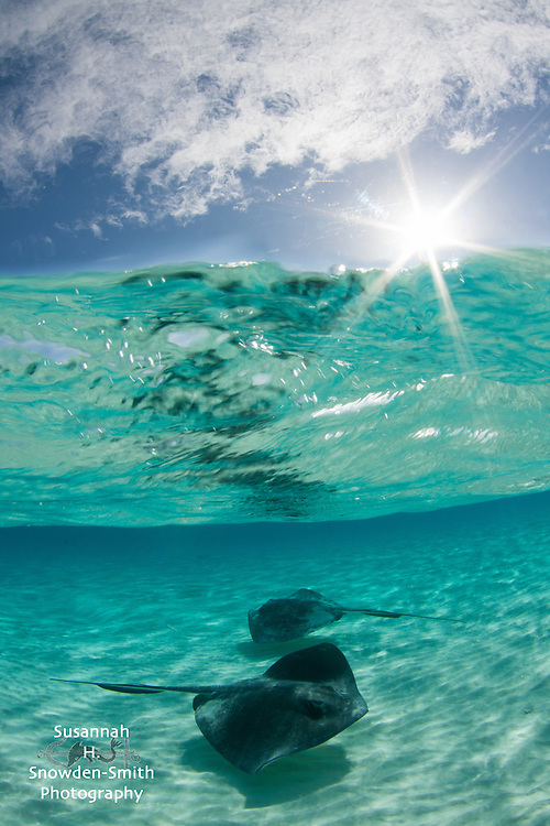 """Layers"" - Stingrays, water, and sky.  Stingray Sandbar, Grand Cayman"