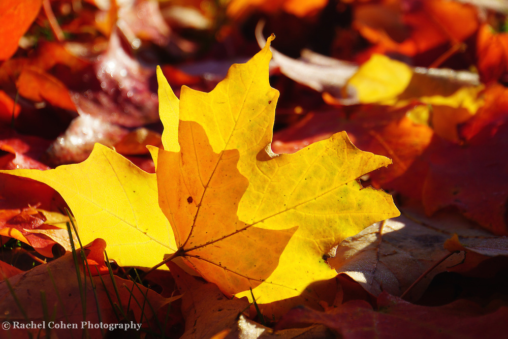 &quot;Of Light and Leaves Too&quot;<br />