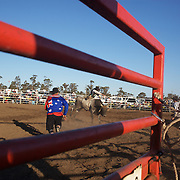Action during the Open Bull Riding competition at the Branxton Rodeo at Branxton, Hunter Valley,  New South Wales, Australia, on Saturday 17th October 2009.  Photo Tim Clayton.