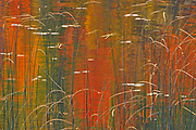 Reeds on Bunny Lake<br />