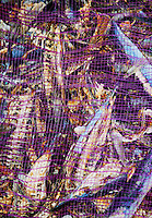 Close-up of dried fish in a sack in Bali, Indonesia - good texture or pattern.