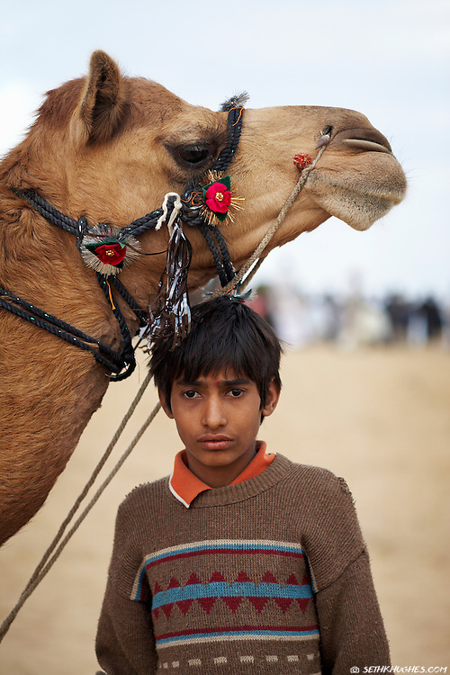 A young Indian boy tends to his family's Arabian camel at the Bikaner Camel Festival. Bikaner, Rajasthan, India. January 22, 2008