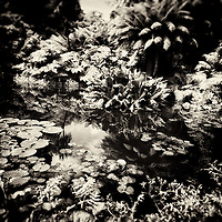 Summer rural scene in England with pond and water plants in the Lost Gardens of Heligan in Cornwall England