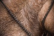 Horse<br /> Chagra or Andean Cowboy<br /> Cotopaxi Province<br /> Andes<br /> ECUADOR, South America