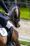 Gareth Hughes - Don Carissimo<br /> CDI Zeeland Outdoor 2018<br /> © DigiShots
