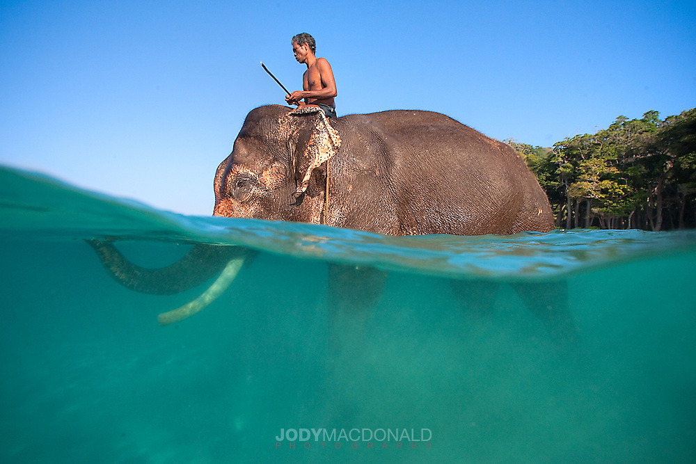 Rajan's mahout, or caretaker has a lifelong bond and a precious friendship with this incredible gentle beast
