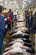 Ahi, Yellow Fin Tuna, United Fish Auction, Honolulu, Oahu, Hawaii