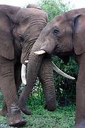 ELEPHANT BUDDIES