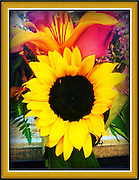 Large Sunflower in brown frame,Iphoneography,Iphone image cellphone photography,Iphone pictures,smartphone pictures