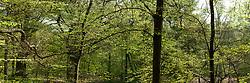 Spanderswoud, 's-Graveland, Wijdemeren, Netherlands