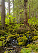 North branch of the Sol Duc River
