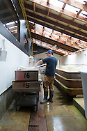 Jacobsen Salt Company in Netarts, Oregon, USA. The salt is harvested from sea water pumped from Netarts Bay in to their facility located on the shore of the bay. Jacobsen Salt was founded in 2011 by owner Ben Jacobsen.  Their main products are flake and kosher sea salts available for sale in their store in Portland, Oregon.  Contact Ben Jacobson sales@jacobsensalt.com or 503-473-3952. Pictured here is Jimmy skimming off some of the precipitate that forms during the evaporation process.