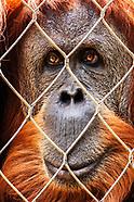 2017 Fresno Chaffee Zoo