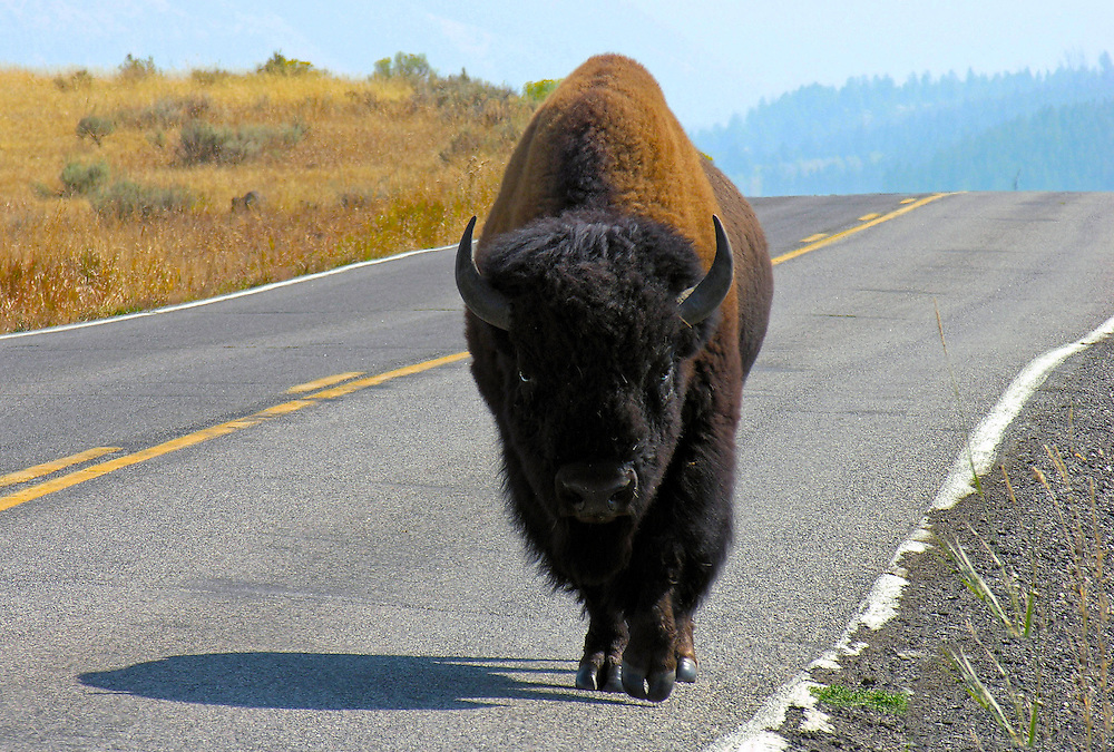 Do not come any closer. Yellowstone National Park.