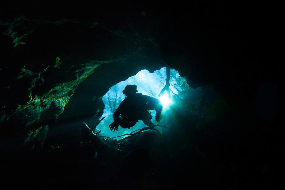 Plongeur pénètre dans la caverne de Peacock Spring, Floride, États-Unis. | Diver entering in Peacock Spring cave entrance, Florida, USA.