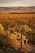 Dubrul Vineyards, Rattlesnake Hills AVA, Yakima Valley,  Washington