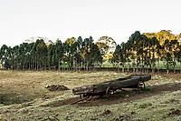 Paisagem rural na Linha Babenberg. Treze Tílias, Santa Catarina, Brasil. / Rural landscape at Linha Babenberg. Treze Tilias, Santa Catarina, Brazil.