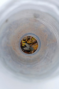 insect caught in a home fabricated plastic fly catching jar