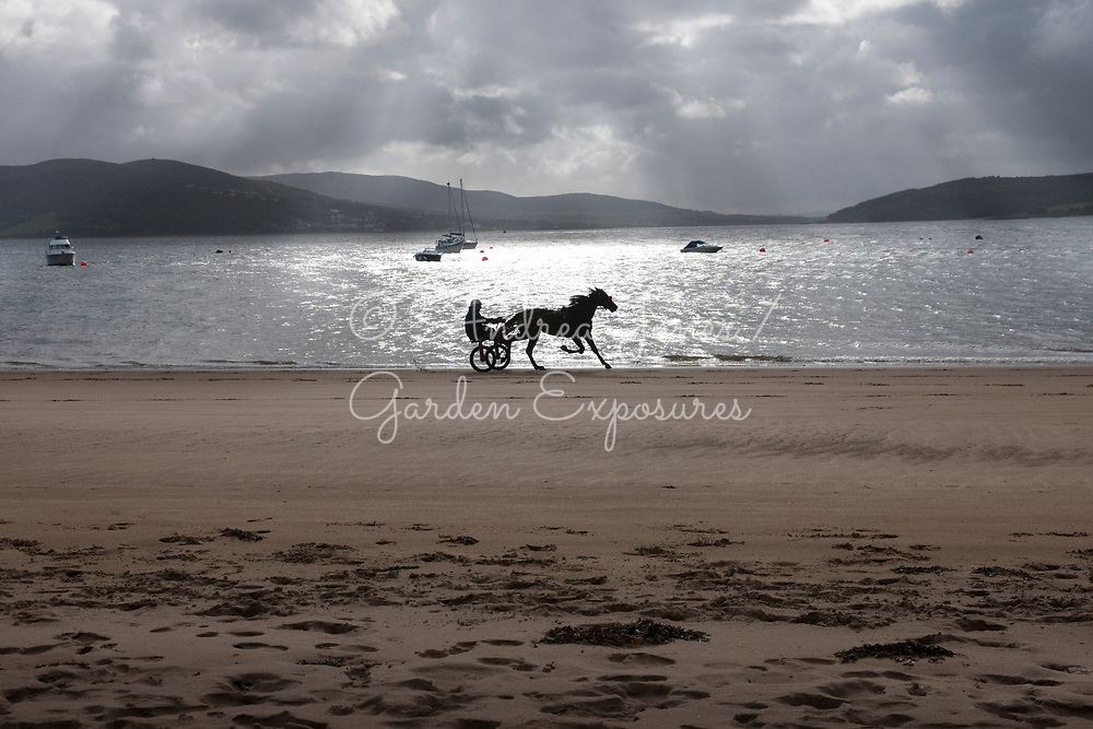 A modern sulky used in harness racing with horse and driver on the beach at Rathmullan (Ráth Maoláin), County Donegal, Ireland
