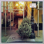 O Christmas Tree<br /> <br /> New York, New York, U.S. - A discarded Christmas tree is propped up next to a parking sign along the sidewalk  of New York City awaiting pick-up.<br /> <br /> O' Christmas Tree - Launched December 24, 2013 - The Christmas tree has become so popular that 8 in 10 Americans say they plan to put one up this year, according to Pew Research Center, bringing the annual U.S. holiday tree market to $1 billion. For the next week, everyone who celebrates the Christmas holiday will be doting over these brightly lit holiday centerpieces until Christmas finally comes. Then, when it's all over, they'll be just as quickly forgotten. The contrast between affection and then abandonment is central to Bryan Smith's set of images titled 'O Christmas Tree'. Bryan wandered the streets the of New York City creating these beautiful images of abandoned Christmas trees at the end of last years festive season.The tree tradition began in the Middle Ages in Roman Catholic countries, when the Feast Day of Adam and Eve was celebrated on Dec. 24. The Germans would do a procession carrying ''paradise trees'' with apples on them representing the forbidden fruit. In England during the Victorian era, when Queen Victoria married Prince Albert, a German, he brought Christmas trees into their palaces. The first official Christmas tree in the USA was lit up in 1842 In Williamsburg, Virginia. <br /> ©Exclusivepix
