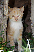 Sad orange kitten out doors