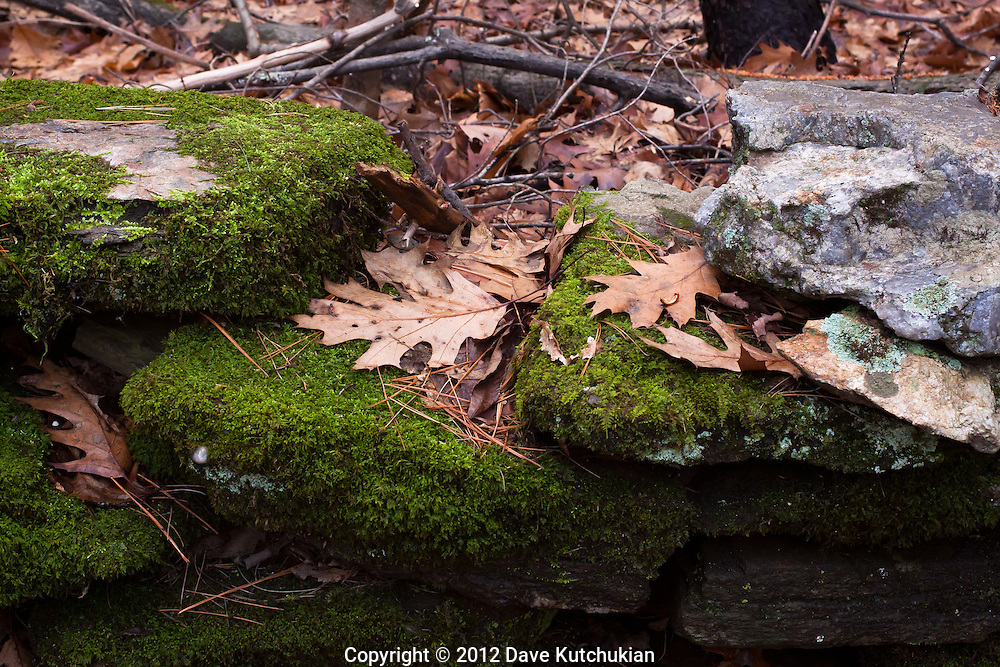 Cemetery wall, green moss and leave covered rocks, Dummerston,VT, large black rocks,