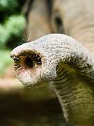 Elephant trunk.