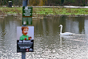 © Licensed to London News Pictures. 03/02/2014. Sunbury, UK. A swan swims by a flooded children's playground. Flooding along the banks of the River Thames in Sunbury in Surrey today 3rd February 2014. Photo credit : Stephen Simpson/LNP