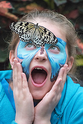 © Licensed to London News Pictures. 16/01/2015. Woking, UK . Emily Godfrey aged 11.  Children at a photocall at RHS Wisley today 16th January. Hundreds of exotic butterflies will once more be released into The Glasshouse at the Royal Horticultural Society's (RHS) Garden Wisley, in Surrey this winter from 17 January to 8 March. Visitors wandering through The Glasshouse will see butterflies such as the striking blue morpho, giant owl, king swallowtail and colourful Malay lacewing flying among the tropical plantings.. Photo credit : Stephen Simpson/LNP